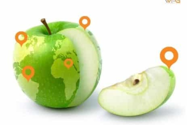 local seo e google my business
